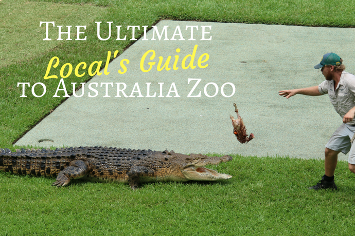 The Ultimate Local's Guide to Australia Zoo